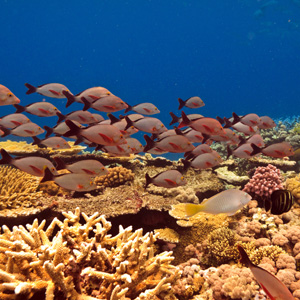 Highlights of the South Pacific with Fiji3