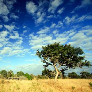 SPLENDORS OF SOUTH AFRICA & VICTORIA FALLS5